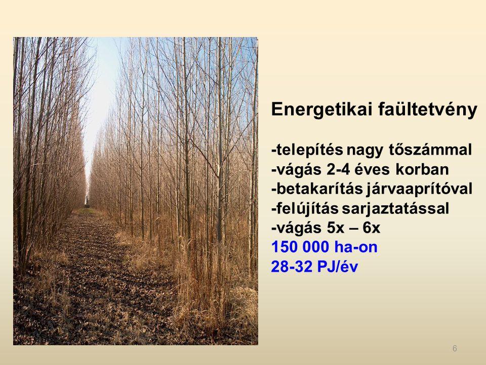 Energetikai faültetvény -telepítés nagy tőszámmal -vágás 2-4 éves korban -betakarítás járvaaprítóval -felújítás sarjaztatással -vágás 5x – 6x 150 000 ha-on 28-32 PJ/év 6