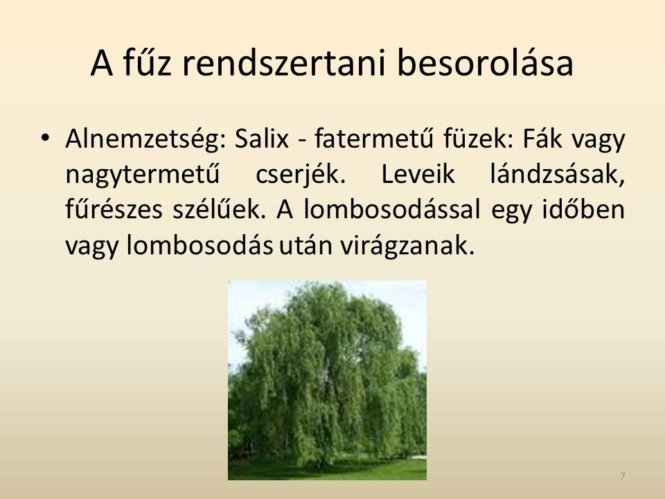 A fűz rendszertani besorolása • Alnemzetség: Salix - fatermetű füzek: Fák vagy nagytermetű cserjék. Leveik lándzsásak, fűrészes szélűek. A lombosodáss