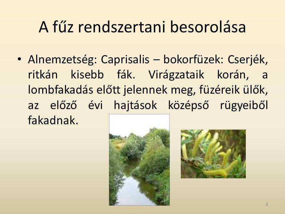 A fűz rendszertani besorolása • Alnemzetség: Caprisalis – bokorfüzek: Cserjék, ritkán kisebb fák.