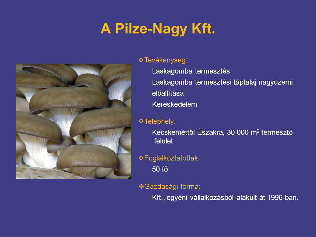 A Pilze-Nagy Kft.  Tevékenység: Laskagomba termesztés Laskagomba termesztési táptalaj nagyüzemi előállítása Kereskedelem  Telephely: Kecskeméttől És