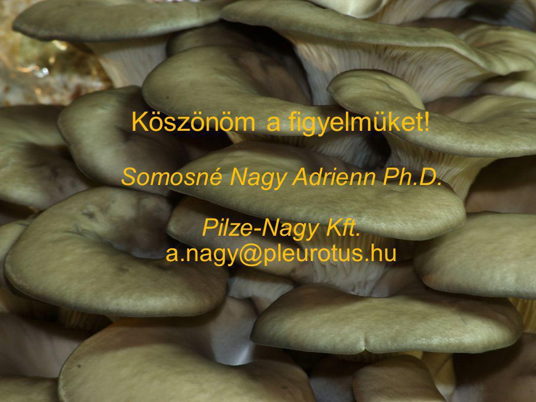 Köszönöm a figyelmüket! Somosné Nagy Adrienn Ph.D. Pilze-Nagy Kft. a.nagy@pleurotus.hu