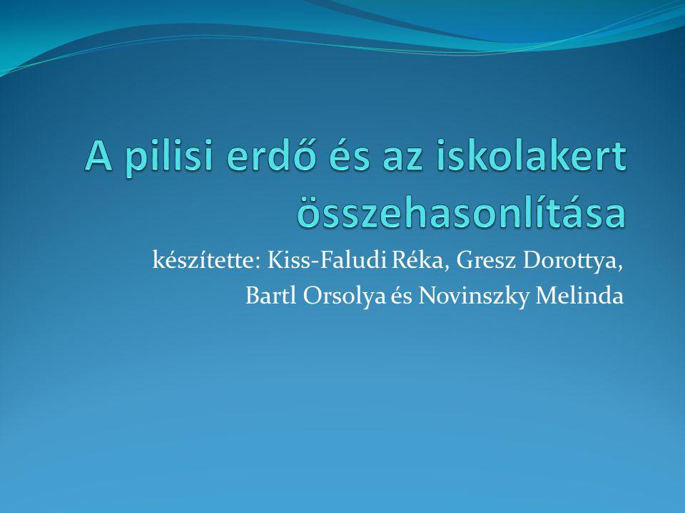 készítette: Kiss-Faludi Réka, Gresz Dorottya, Bartl Orsolya és Novinszky Melinda