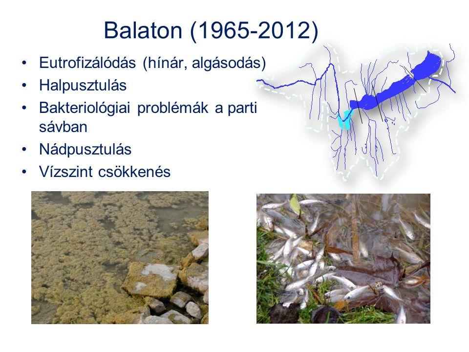 Balaton (1965-2012) •Eutrofizálódás (hínár, algásodás) •Halpusztulás •Bakteriológiai problémák a parti sávban •Nádpusztulás •Vízszint csökkenés