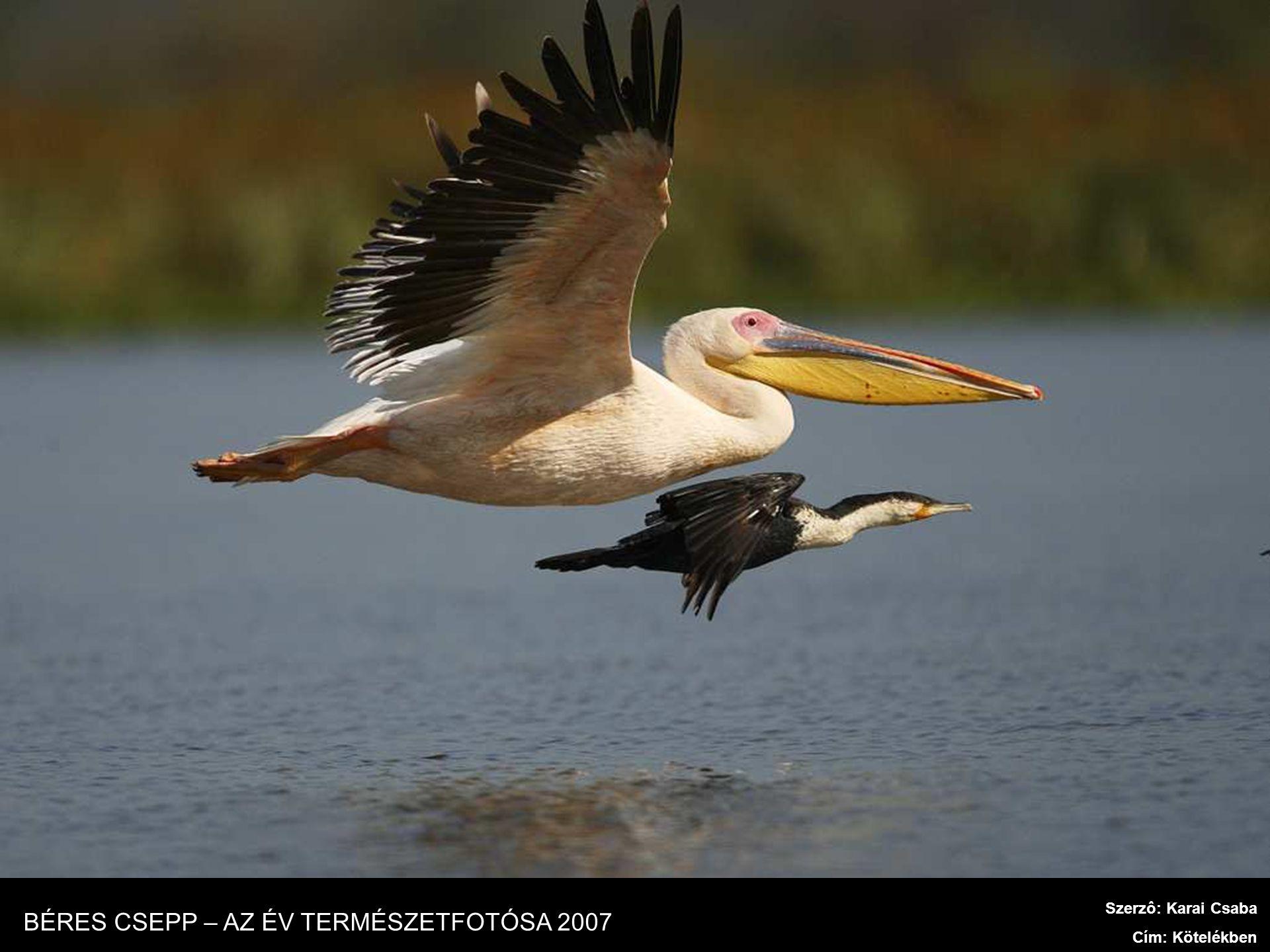 Szerzô: Karai Csaba Cím: Hiéna és flamingó BÉRES CSEPP – AZ ÉV TERMÉSZETFOTÓSA 2007