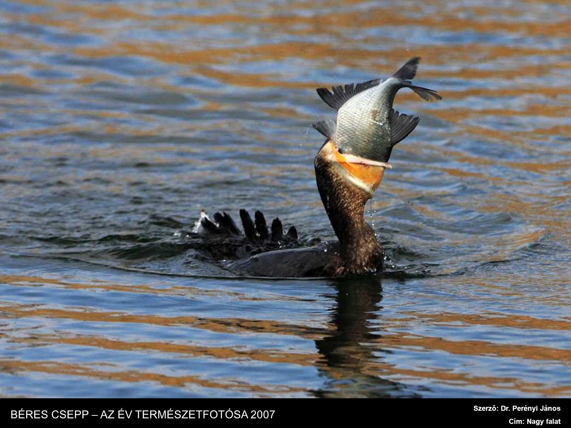 Szerzô: Baranyai Antal Cím: A nagy horgász BÉRES CSEPP – AZ ÉV TERMÉSZETFOTÓSA 2007