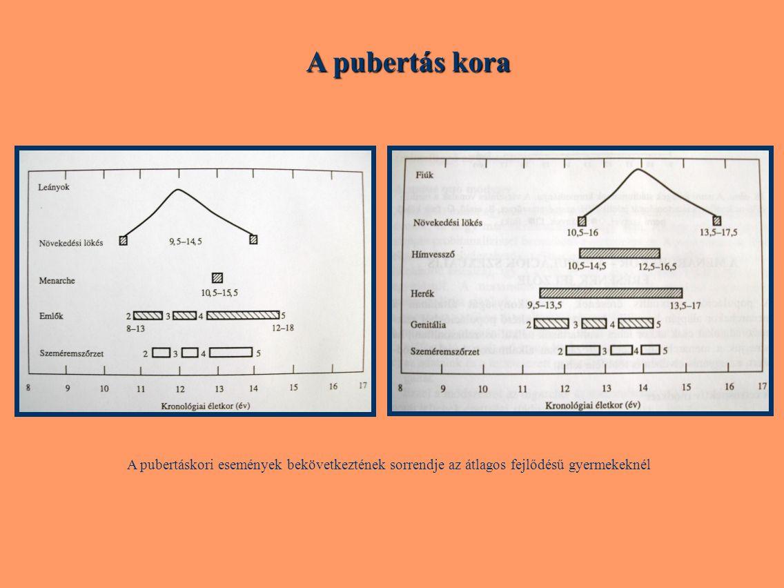 A pubertás kora A pubertáskori események bekövetkeztének sorrendje az átlagos fejlődésű gyermekeknél