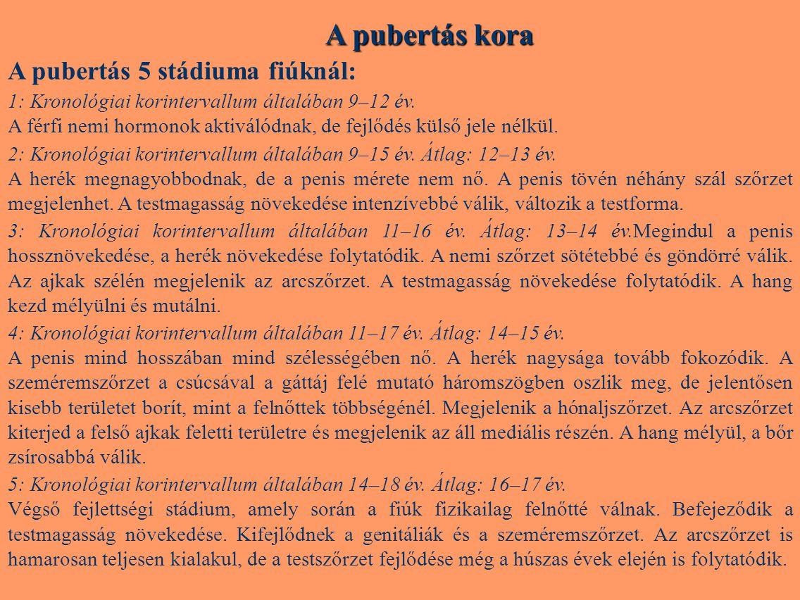 A pubertás kora A pubertás 5 stádiuma fiúknál: 1: Kronológiai korintervallum általában 9–12 év. A férfi nemi hormonok aktiválódnak, de fejlődés külső