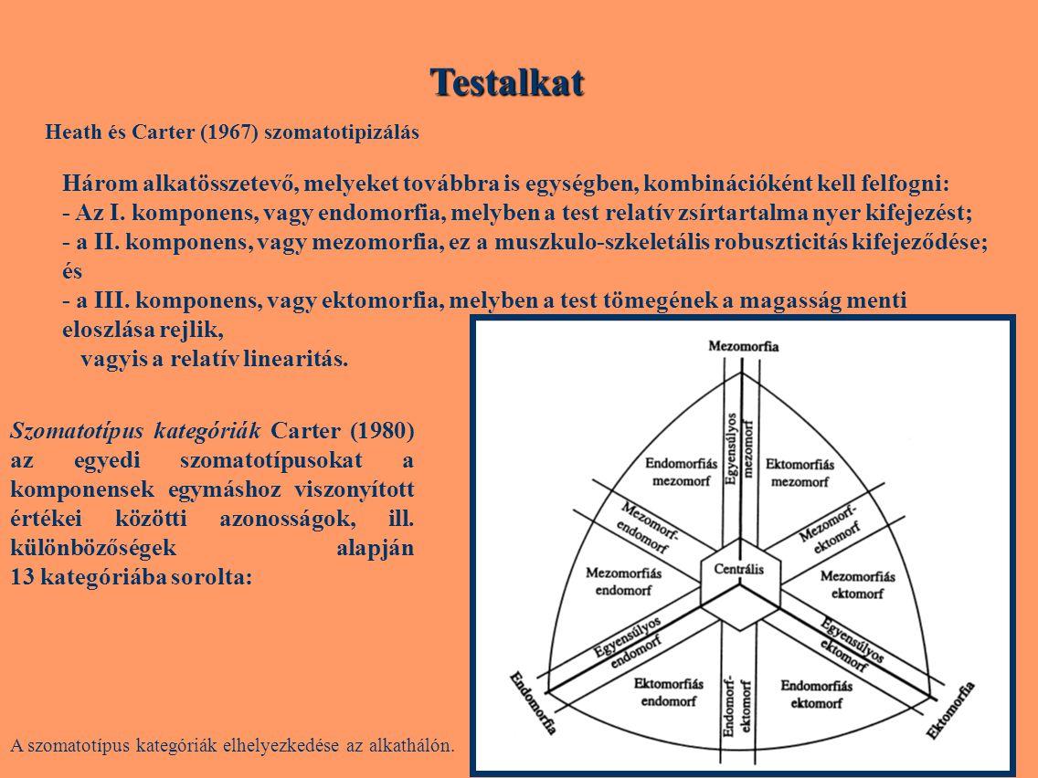 Testalkat Három alkatösszetevő, melyeket továbbra is egységben, kombinációként kell felfogni: - Az I. komponens, vagy endomorfia, melyben a test relat