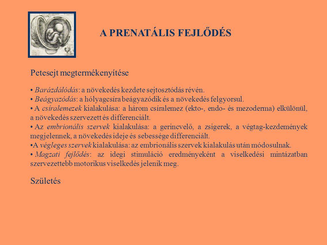 Pubertas tarda Pubertas tardaról (késői érés), ha a nemi érés jellemzői közül egyik sem jelentkezik 14 éves kor előtt.