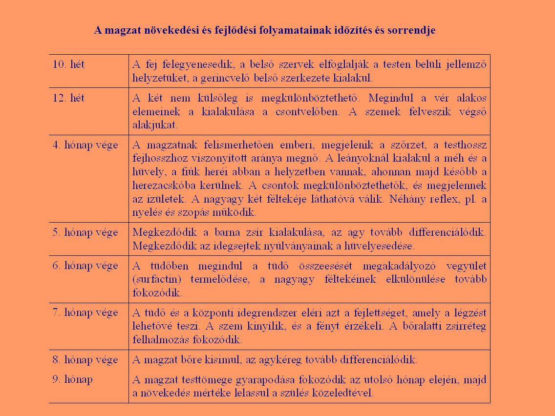 Sheldon (1940): Szomatotípus Testalkat Endomorf 7-1-1 Mezomorf 1-7-1Ektomorf 1-1-7 Centrális 4-4-4