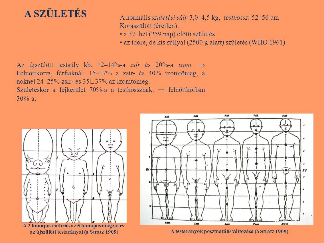Testösszetétel A testösszetétel becslése Módszerek: (1) közvetlen kémiai vizsgálatok: szervek, szervrendszerek szöveteit alkotó sejtek kémiai összetétele, száma, mérete becsülhető.