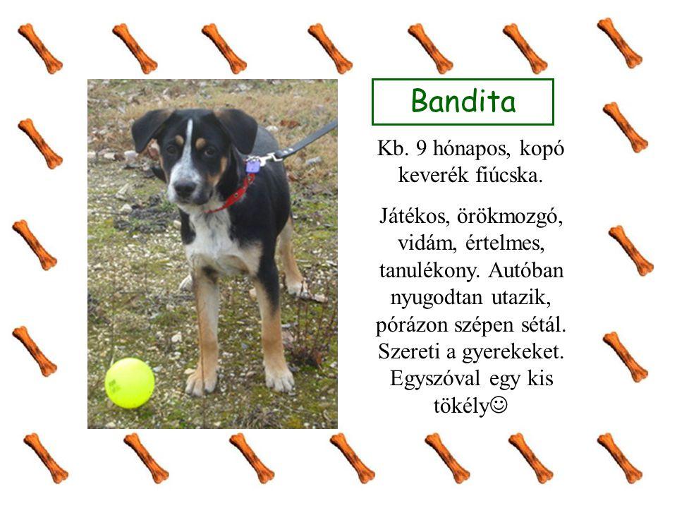 Bandita Kb. 9 hónapos, kopó keverék fiúcska. Játékos, örökmozgó, vidám, értelmes, tanulékony. Autóban nyugodtan utazik, pórázon szépen sétál. Szereti