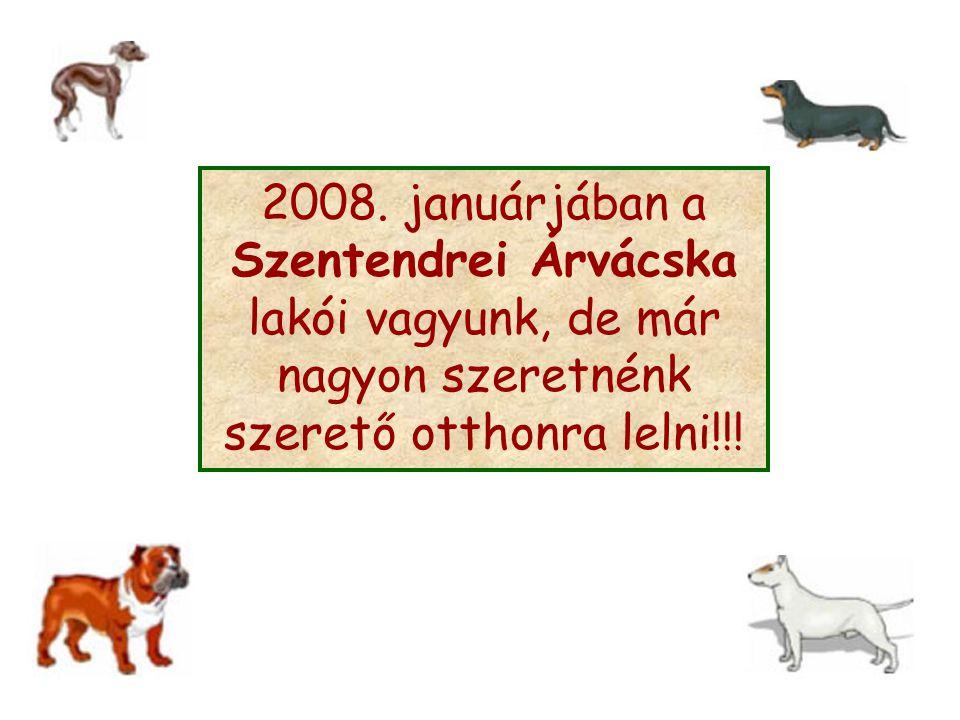 2008. januárjában a Szentendrei Árvácska lakói vagyunk, de már nagyon szeretnénk szerető otthonra lelni!!!