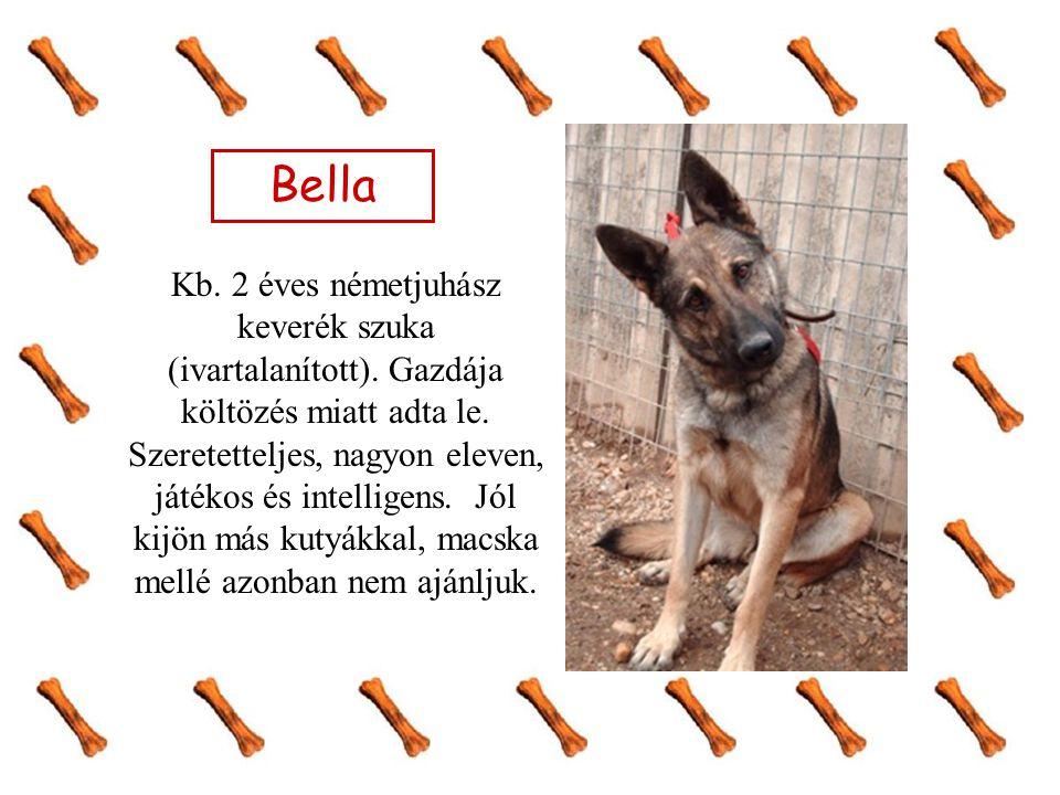Bella Kb. 2 éves németjuhász keverék szuka (ivartalanított). Gazdája költözés miatt adta le. Szeretetteljes, nagyon eleven, játékos és intelligens. Jó