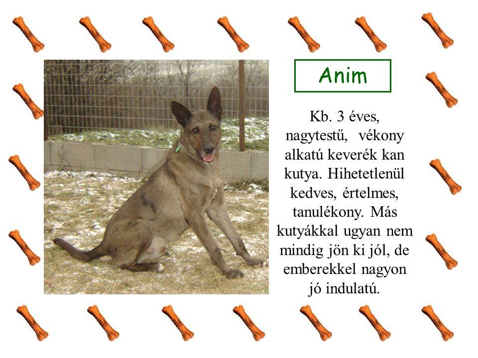 Anim Kb. 3 éves, nagytestű, vékony alkatú keverék kan kutya. Hihetetlenül kedves, értelmes, tanulékony. Más kutyákkal ugyan nem mindig jön ki jól, de