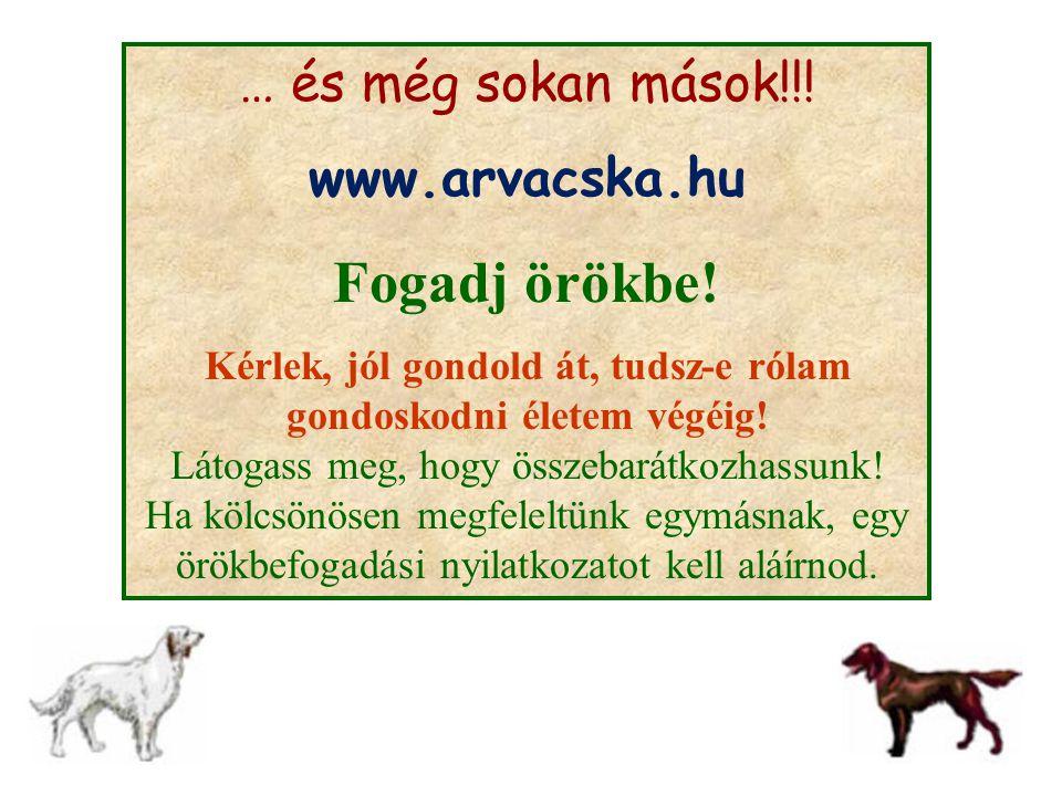 … és még sokan mások!!! www.arvacska.hu Fogadj örökbe! Kérlek, jól gondold át, tudsz-e rólam gondoskodni életem végéig! Látogass meg, hogy összebarátk