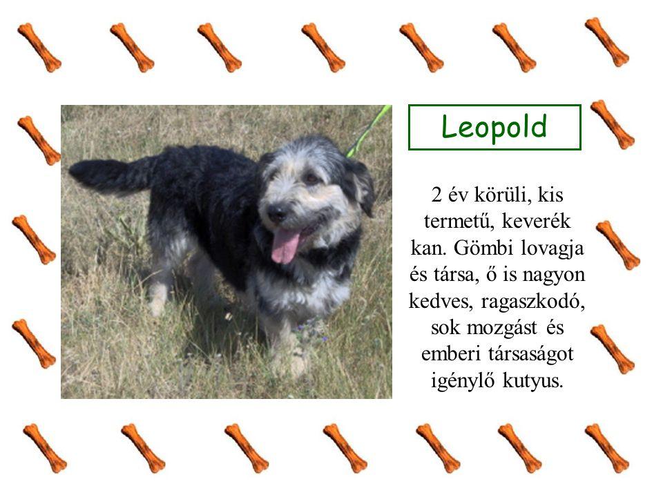 Leopold 2 év körüli, kis termetű, keverék kan. Gömbi lovagja és társa, ő is nagyon kedves, ragaszkodó, sok mozgást és emberi társaságot igénylő kutyus