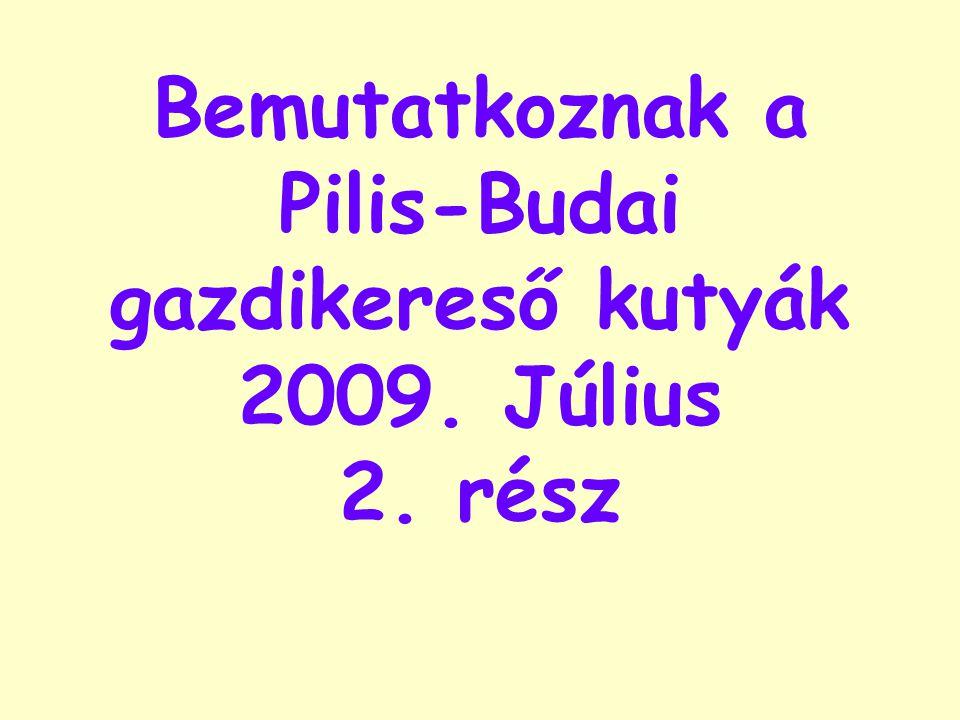 Bemutatkoznak a Pilis-Budai gazdikereső kutyák 2009. Július 2. rész