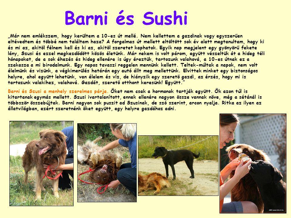 """Barni és Sushi """"Már nem emlékszem, hogy kerültem a 10-es út mellé."""