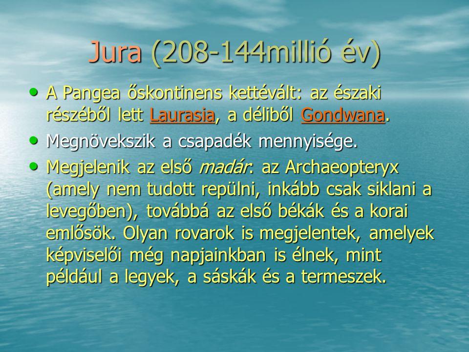 Jura (208-144millió év) • A Pangea őskontinens kettévált: az északi részéből lett Laurasia, a déliből Gondwana. • Megnövekszik a csapadék mennyisége.