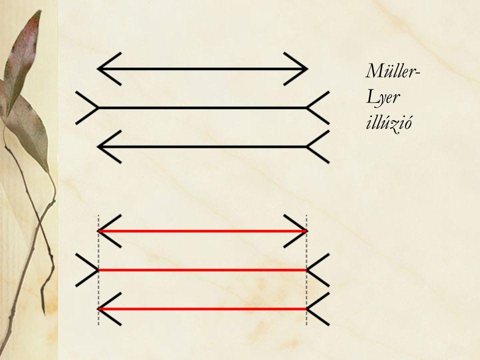 Müller- Lyer illúzió