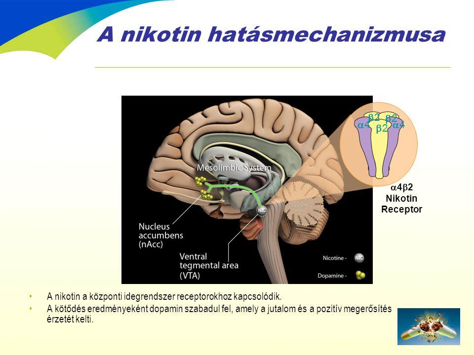 A nikotin hatásmechanizmusa •A nikotin a központi idegrendszer receptorokhoz kapcsolódik. •A kötődés eredményeként dopamin szabadul fel, amely a jutal