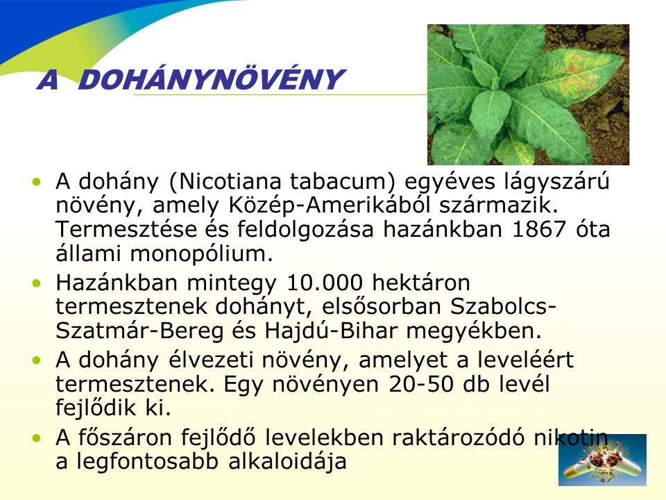 A DOHÁNYNÖVÉNY •A dohány (Nicotiana tabacum) egyéves lágyszárú növény, amely Közép-Amerikából származik. Termesztése és feldolgozása hazánkban 1867 ót