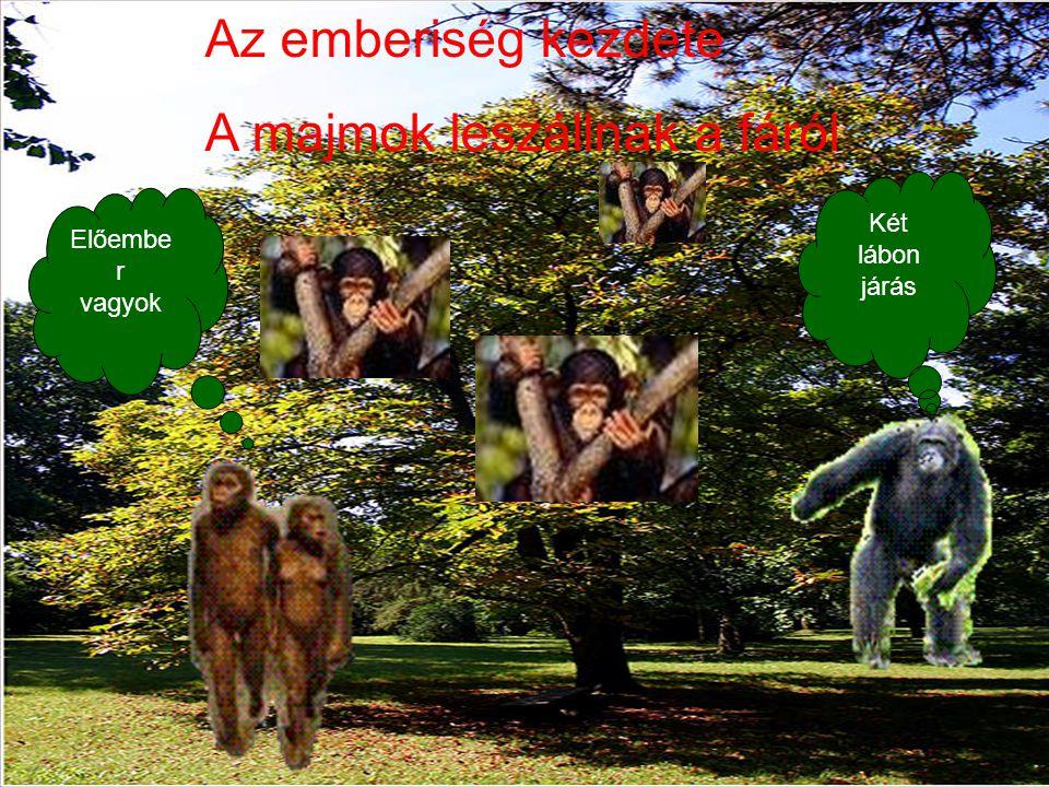 Az emberiség kezdete A majmok leszállnak a fáról Két lábon járás Előembe r vagyok