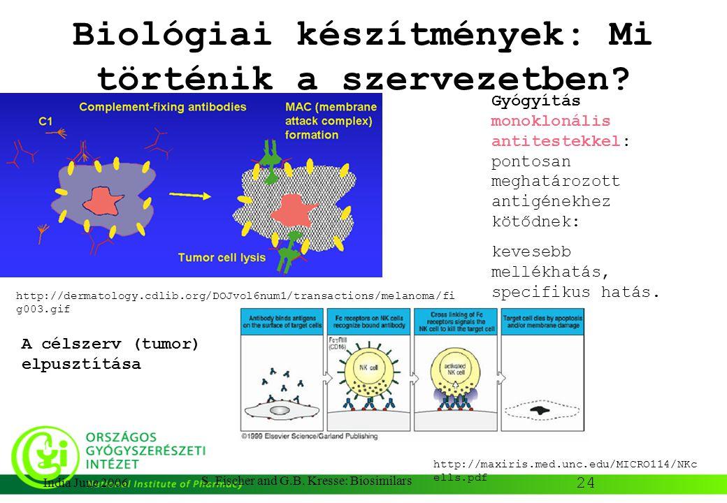 24 India June 2006 S. Fischer and G.B. Kresse: Biosimilars Biológiai készítmények: Mi történik a szervezetben? Gyógyítás monoklonális antitestekkel: p