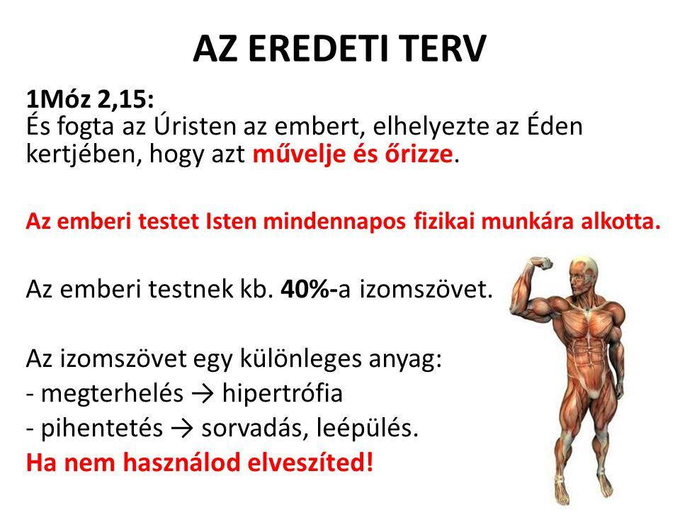 AZ EREDETI TERV 1Móz 2,15: És fogta az Úristen az embert, elhelyezte az Éden kertjében, hogy azt művelje és őrizze. Az emberi testet Isten mindennapos
