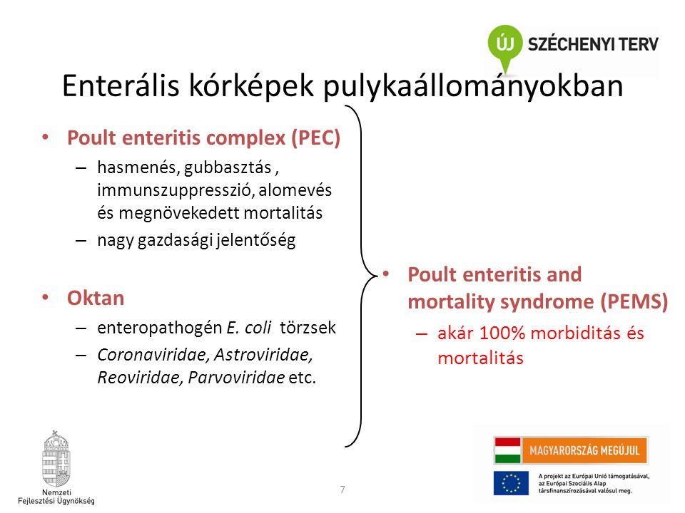 7 • Poult enteritis complex (PEC) – hasmenés, gubbasztás, immunszuppresszió, alomevés és megnövekedett mortalitás – nagy gazdasági jelentőség • Oktan