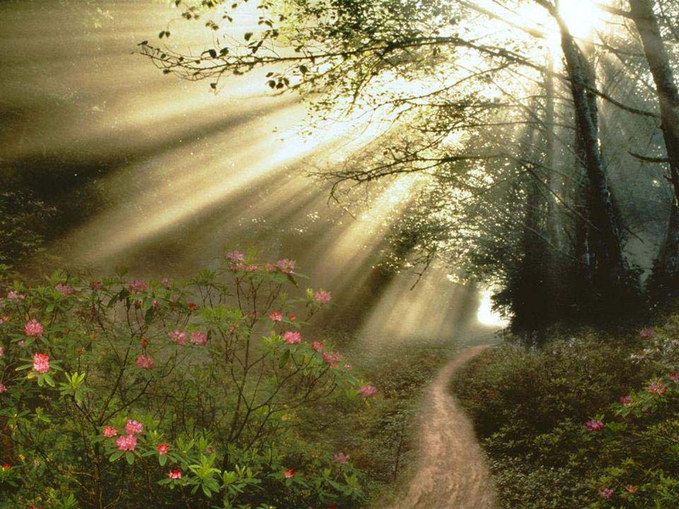 Boldogok, akik jóságukkal megkönnyítik napjaimat, amelyek még hátra vannak az örök hazába vivő úton.