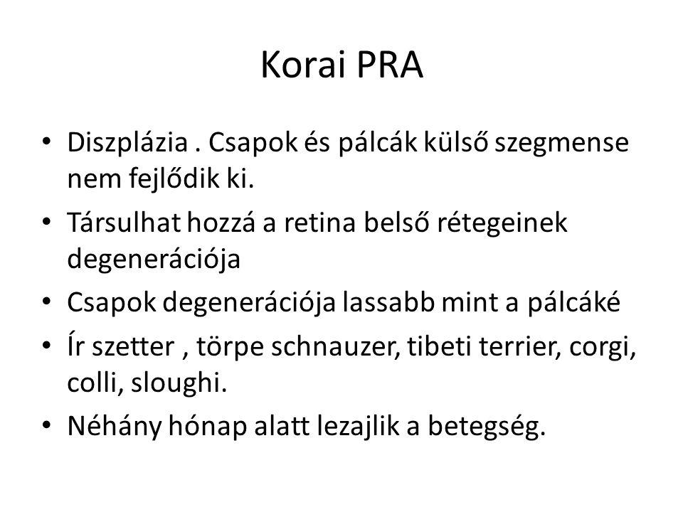 Korai PRA • Diszplázia. Csapok és pálcák külső szegmense nem fejlődik ki. • Társulhat hozzá a retina belső rétegeinek degenerációja • Csapok degenerác