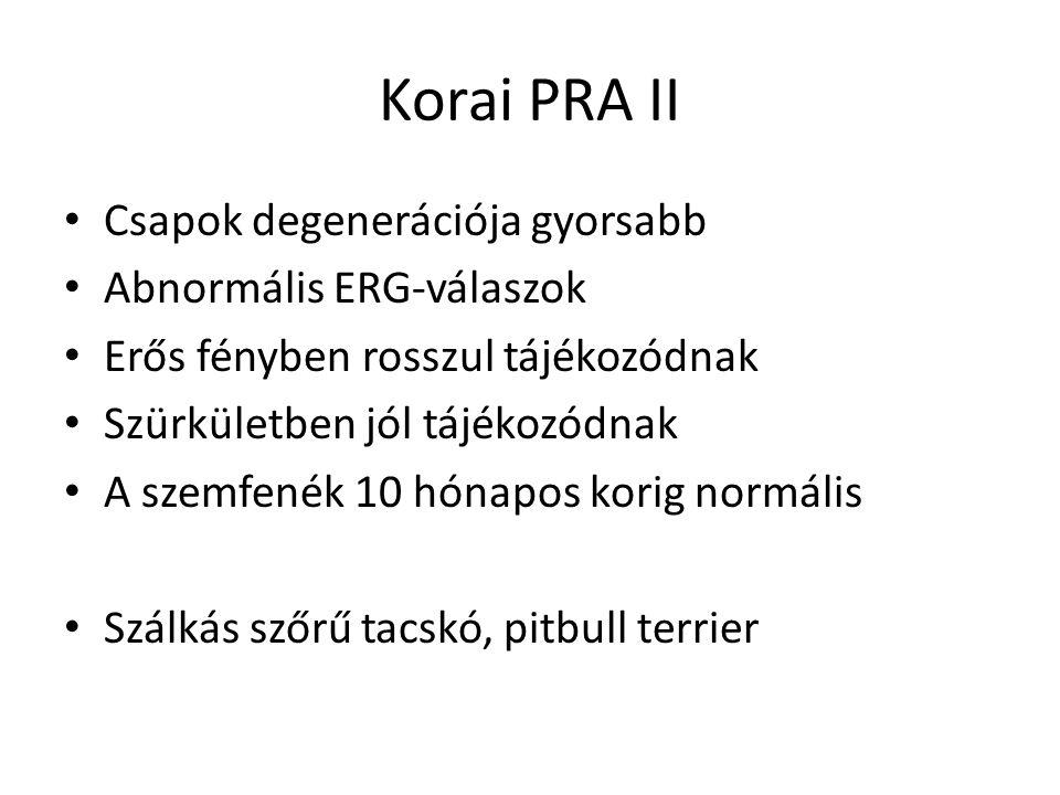 Korai PRA II • Csapok degenerációja gyorsabb • Abnormális ERG-válaszok • Erős fényben rosszul tájékozódnak • Szürkületben jól tájékozódnak • A szemfen