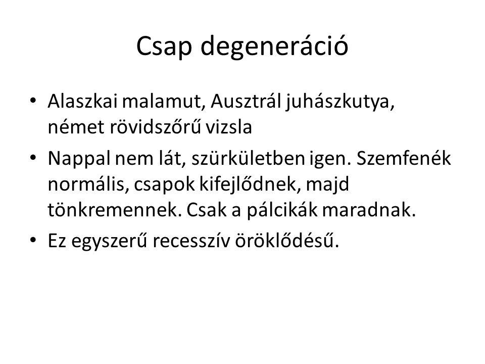 Csap degeneráció • Alaszkai malamut, Ausztrál juhászkutya, német rövidszőrű vizsla • Nappal nem lát, szürkületben igen. Szemfenék normális, csapok kif