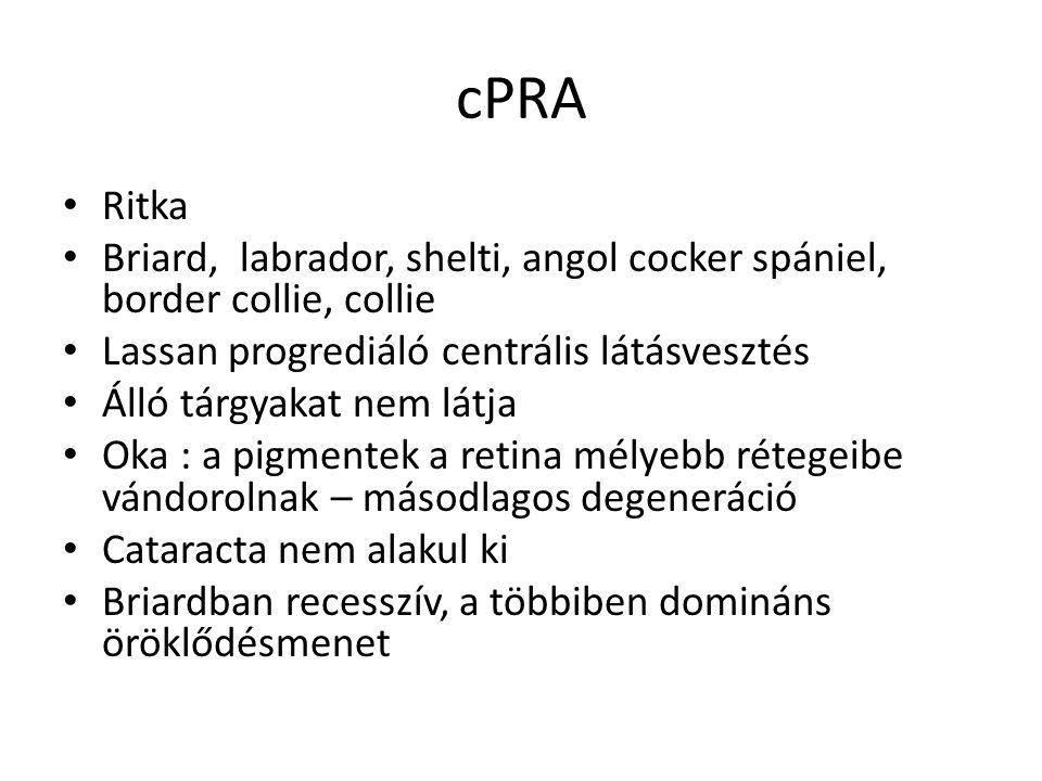 cPRA • Ritka • Briard, labrador, shelti, angol cocker spániel, border collie, collie • Lassan progrediáló centrális látásvesztés • Álló tárgyakat nem