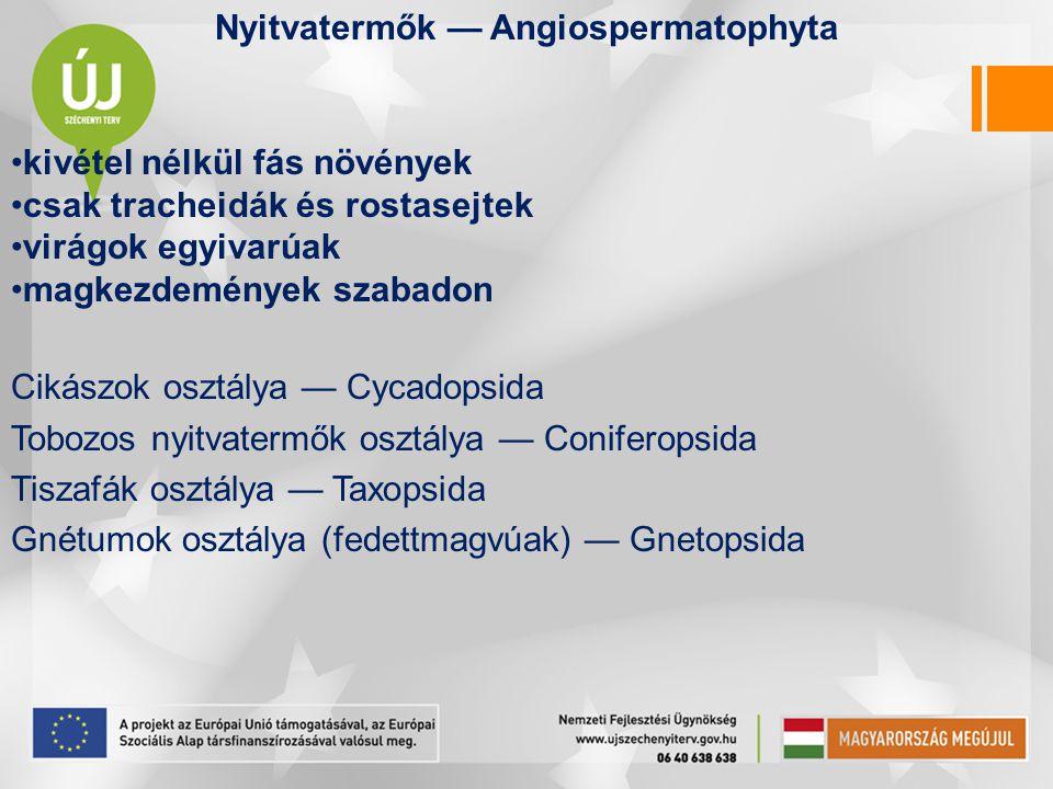 Cikászok osztálya — Cycadopsida •levél nagy, nyeles, ritkán nyél nélküli, nagyon hasonlít a páfránylevelekhez •magkezdeményeik termőleveleken fejlődnek; ezek nem tömörülnek tobozzá •megtermékenyítés csillós spermatozoidokkal