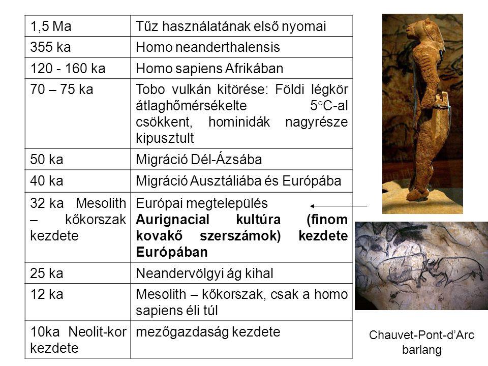 1,5 MaTűz használatának első nyomai 355 kaHomo neanderthalensis 120 - 160 kaHomo sapiens Afrikában 70 – 75 kaTobo vulkán kitörése: Földi légkör átlagh
