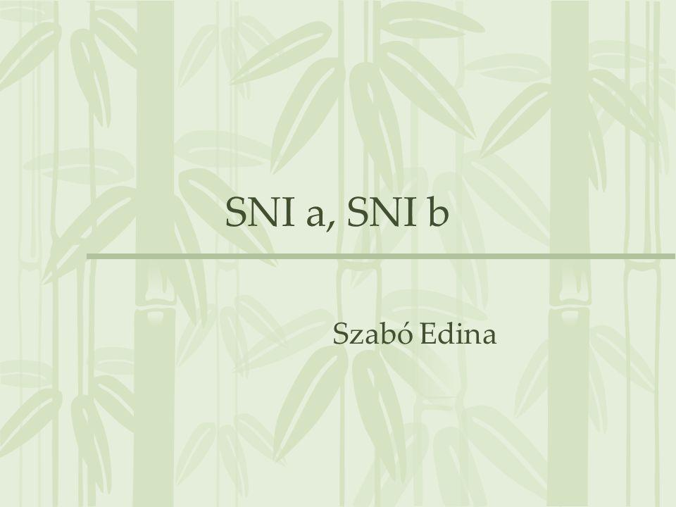 SNI vizsgálata, megállapítása 10.