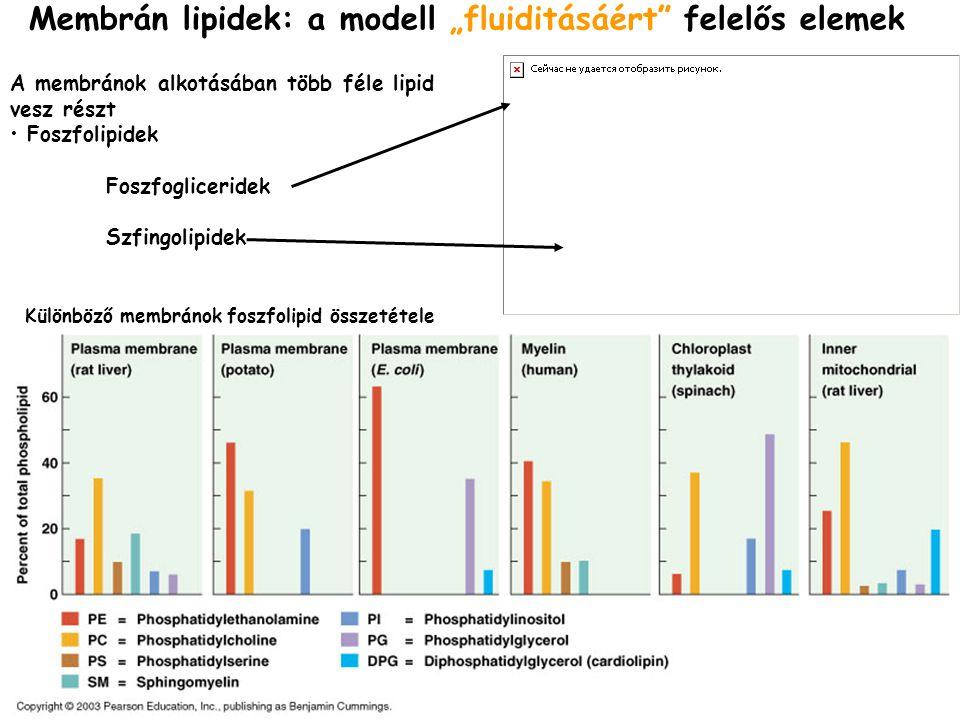 """Membrán lipidek: a modell """"fluiditásáért"""" felelős elemek A membránok alkotásában több féle lipid vesz részt • Foszfolipidek Foszfogliceridek Szfingoli"""