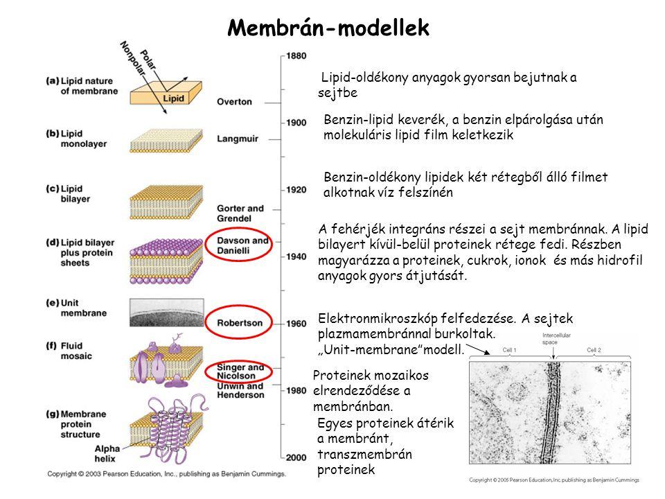 Membrán-modellek Lipid-oldékony anyagok gyorsan bejutnak a sejtbe Benzin-lipid keverék, a benzin elpárolgása után molekuláris lipid film keletkezik Be