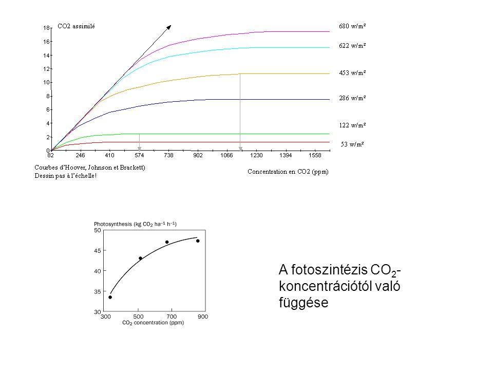 A fotoszintézis CO 2 - koncentrációtól való függése