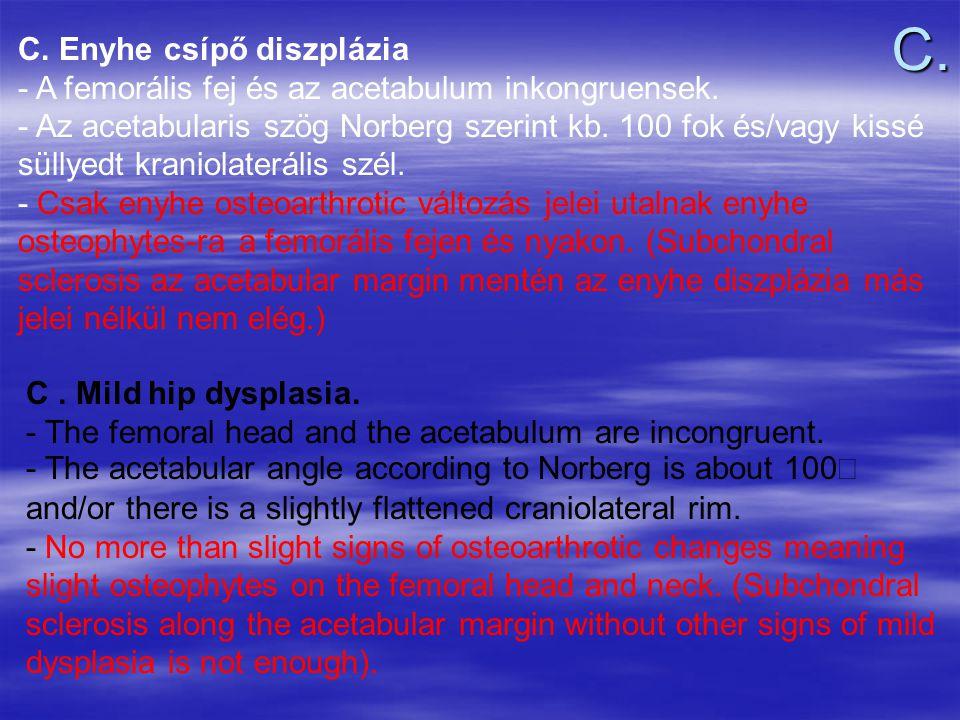 C. Enyhe csípő diszplázia - A femorális fej és az acetabulum inkongruensek. - Az acetabularis szög Norberg szerint kb. 100 fok és/vagy kissé süllyedt