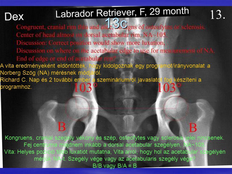 13c Kongruens, cranial szegély vékony és szép, osteofytes vagy sclerosis jelei nincsenek. Fej centruma majdnem inkább a dorsal acetabular szegélyen, N
