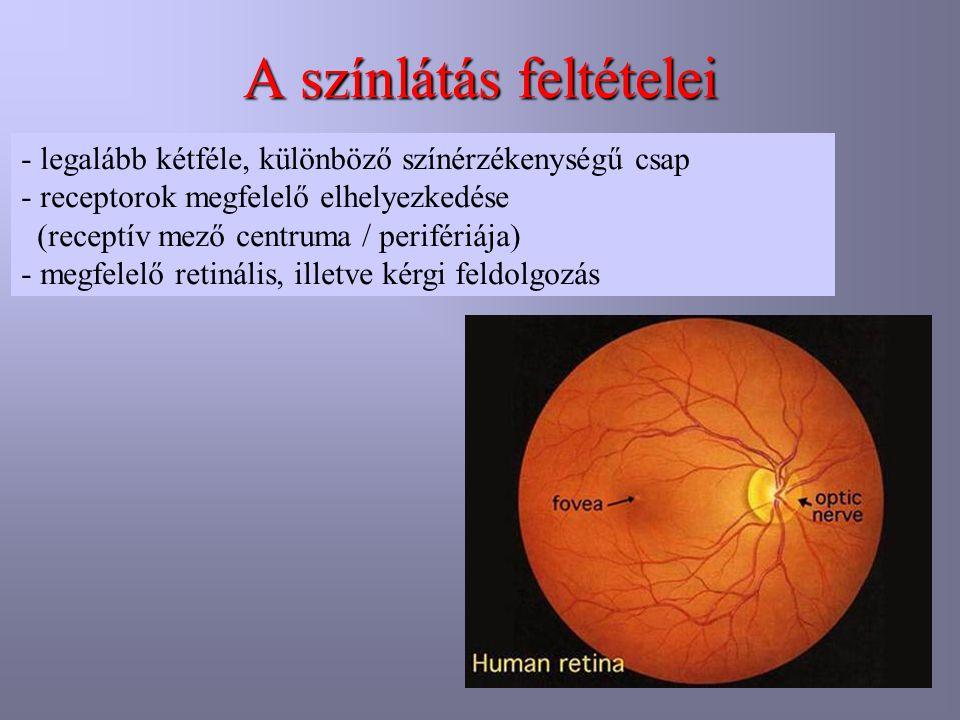 A színlátás feltételei - legalább kétféle, különböző színérzékenységű csap - receptorok megfelelő elhelyezkedése (receptív mező centruma / perifériája) - megfelelő retinális, illetve kérgi feldolgozás