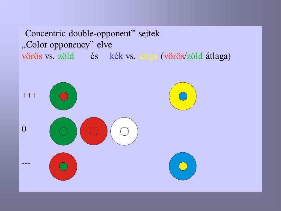""""""" Concentric double-opponent"""" sejtek """"Color opponency"""" elve vörös vs. zöld és kék vs. sárga (vörös/zöld átlaga) +++ 0 ---"""