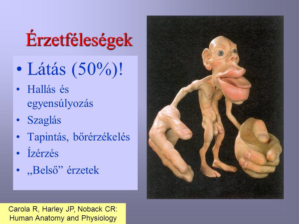 """Érzetféleségek •Látás (50%)! •Hallás és egyensúlyozás •Szaglás •Tapintás, bőrérzékelés •Ízérzés •""""Belső"""" érzetek Carola R, Harley JP, Noback CR: Human"""
