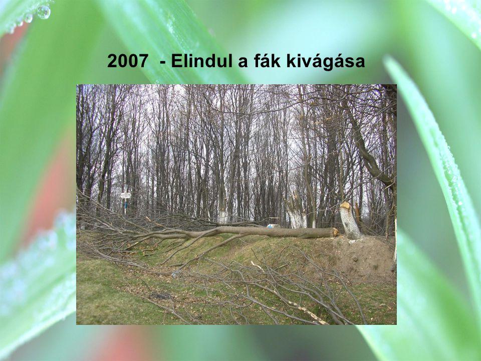 2007 - Elindul a fák kivágása