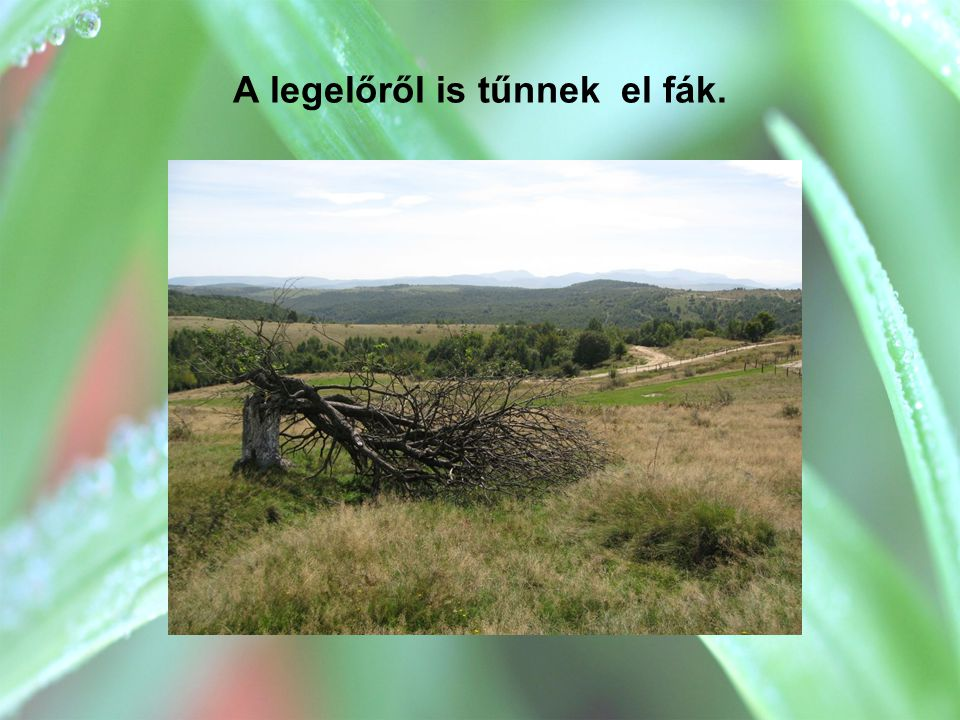 A legelőről is tűnnek el fák.