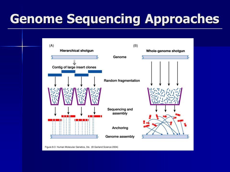 • Gének száma, funkciói • Genek regulációja • DNS szekvencia szervezettsége Kromoszómák felépítése, organizációja • Nem kódoló DNS szerkezete, típusai, felépítése, szerepe • Génexpresszió, transzláció, módosítások koordinálása • Fehérje kölcsönhatások • Gén funkciók jóslása és kisérletes bizonyítása • Az evolúció • Fehérjék evolúciója (structure and function) • Proteomes (total protein content and function) in organisms • Az SNP-k(single-base DNA variations among individuals) szerepe betegségekben • Disease-susceptibility prediction based on gene sequence variation • Multigenes betegségekben szerepet játszó gének vizsgálata • A genetika, genomika fejlesztése A jövő kérdései: U.S.